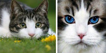 Kedilerde Göz Akıntısı İle İlgili Mutlaka Bilmeniz Gereken 12 Şey