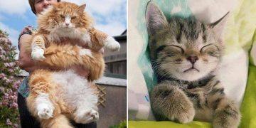 Kedilerde İştahsızlık Belirtileri ve Tedavisi
