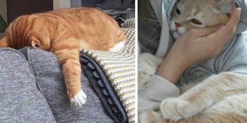 Kedileri Soğuktan Korumanın 13 Yolu