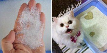 Kristal Kedi Kumu Hakkında 14 Bilgi