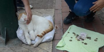 Açım Lütfen Boş Geçmeyelim: Mama İçin Dilenen Sokak Kedisi