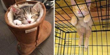 Profesyonel Uykucu Olan Kedilerden 19 Birbirinden Minnoş Fotoğraf