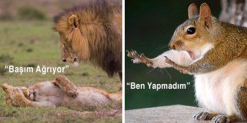 Hayvanların Doğal Yaşam Alanlarından Mükemmel Zamanlama İle Çekilmiş En Komik 40 Fotoğraf