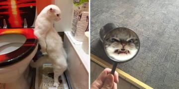 Yüzünüzü Güldürecek 10'nun Üstünde Kedilerin Cennetten Gönderildiğine Kanıt Fotoğraflar