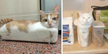 """""""Sığabildiğim Her Yer Benimdir"""" Kafasında Olan Kedilerden +10 Fotoğraf"""