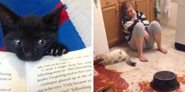 Kedi Sahiplerinin Çok İyi Anlayacağı 19 Komik Durum