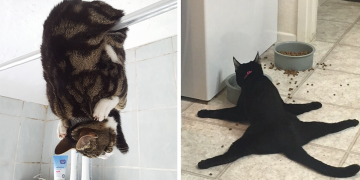 Hiç Bir Sebep Yokken Kedilerin Yaptığı +10 Garip Hareket