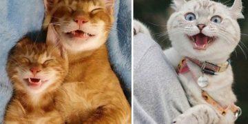 Kedinizi Mutlu Etmenin 14 Güzel Yolu