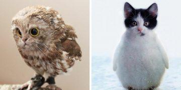 Photoshop'la Yapılmış Beyin Kamaştıran 16 Hayvan Fotoğrafı