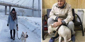Sahibinin Hayatını Kurtaran Kahraman Köpek Hayata Gözlerini Yumdu