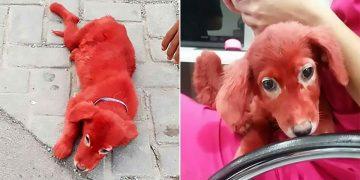 Köpeğini Kırmızıya Boyayan Cani Adam ve Onu Eski Haline Döndüren İyi İnsanlar