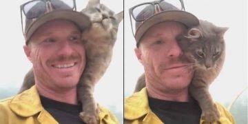 Yangından Kurtarılan Kedi Kahramanının Yanından Bir An Olsun Ayrılmıyor