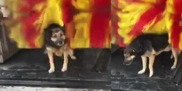 Günün Keyifli Videosu: Araç Yıkama Makinesine Bedava Masaj Yaptıran Tatlı Köpek
