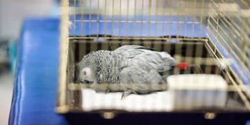 Papağanın Ölümü İle İlgili İlk Açıklama Geldi