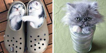 Kediseverlerin Çok İyi Bildiği 14 Tuhaf Kedi Hareketi