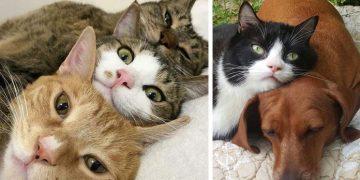 Hem Kedi Hem de Köpek Besleyenlerin Çok İyi Anlayabileceği 7 Durum