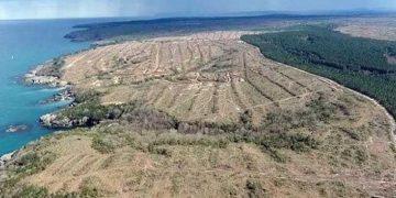 Yazık Çok Yazık: Japonya, Uğruna 650 Bin Ağaç Kesilen Sinop Nükleer Santralinden Vazgeçti