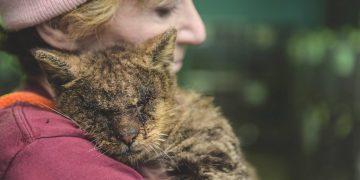 Kedisevmez İnsanların Bir Türlü Anlayamayacağı 9 Kedi Sevme Olayı