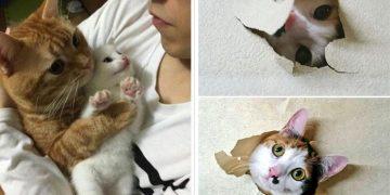 Kediler Dünyayı Terk Etse Yaşanabilecek 12 Hüzünlü Durum
