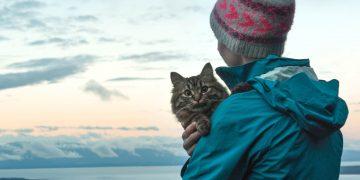 Kediler ile Seyahat Planlayanlara 15 Özel Tavsiye