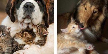 Kediler ve Köpeklerden Korkan İnsanların Asla Anlayamayacağı 13 Duygu