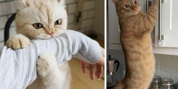 Kedilerin Nefret Ettiği 12 İnsan Davranışı