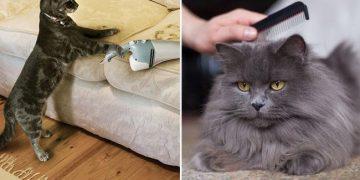 Kedilerin Tüy Dökmesinin 9 Şaşırtıcı Nedeni