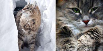 Bu Kış Hemen Bir Kedi Sahiplenmeniz İçin 14 Güzel Neden
