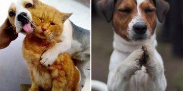 Köpekler İle İlgili Daha Önce Hiç Duymadığınız 11 İlginç Bilgi