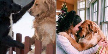 Bir Köpek ile Hayat Boyu Dostluk Kurmayı Düşünenlere 12 Altın Tavsiye