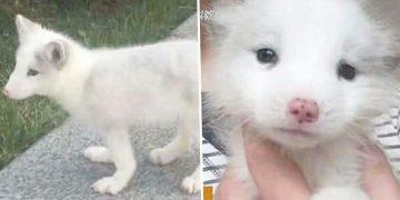 Petshoptan Köpek Diye Satın Aldığı Hayvan Aslında Bakın Ne Çıkıyor