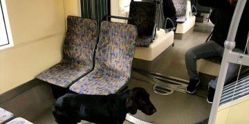 Eskişehir'de Yolcularla Birlikte Tramvaya Binen Dünyalar Tatlısı Sokak Köpeği