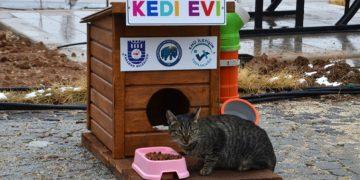 Üniversite Öğrencileri Kedi ve Köpekler İçin Ev Yaptı