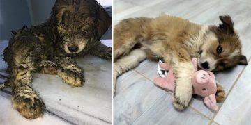 Kanalizasyon İçinde Yaralı Halde Bulunan Yavru Köpeğin Hayata Tutunma Hikayesi