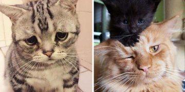 Kedinizin Depresyona Girdiğinin 12 Belirtisi