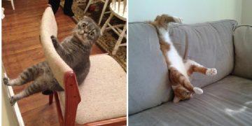Kedilerin Hayret Verici 12 İlginç Hareketi