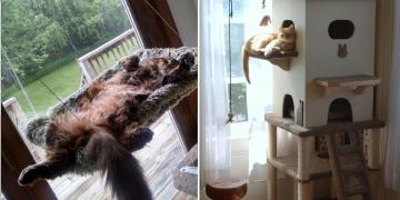 Kedi Evi ve Yuvası Hakkında Dikkat Etmeniz Gereken 11 Şey