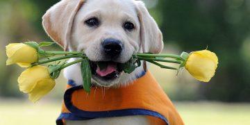Köpekleri Gezdirirken Dikkat Etmeniz Gereken 12 Durum