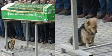 Her Gün Evden Kaçan Köpeğin Kaçıp Nereye Gittiğini Görünce Gözyaşlarını Tutamadı
