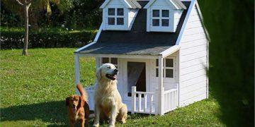 Köpek Kulübesi Hakkında Dikkat Etmeniz Gereken 12 Şey