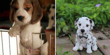 Köpeklerin Depresyona Girmesine Yol Açan 10 Sebep