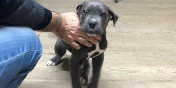 Akıl Almaz Olay: 4 Aylık Yavru Köpeği Haczettiler