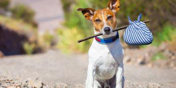 Köpeğiniz Kaybolursa İzlemeniz Gereken 11 Adım