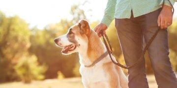 Köpekleri Dolaştırırken Dikkat Etmeniz Gereken 12 Durum