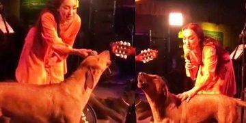 Leman Sam'a Sahnede Eşlik Eden Masum Sokak Köpeğini Zehirlediler