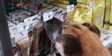 Sokak Köpeğini Petshopa Götüren, Dokunduğu ve Kokladı Her Şeyi Satın Alan Güzel İnsan