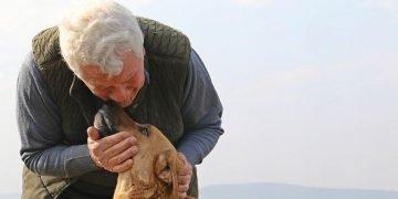 Kalan Ömrünü Sokak Hayvanlarına Adayan Yüreği Güzel Öğretmenimiz